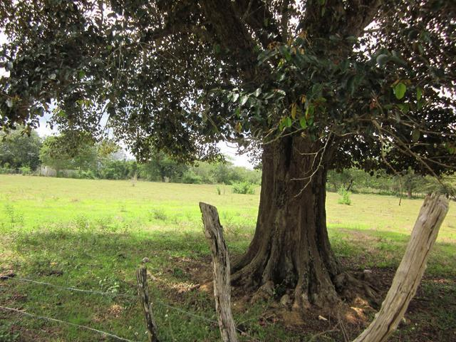 This Plot Of Land Is Over 4 Acres Conical In Shape And Is
